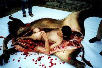 """从""""牛腹疗法""""谈历史上的蒙古医药学"""