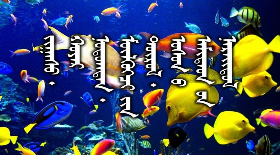名词合集:水生.两栖.爬行类动物的名称81种(蒙古文 汉语)