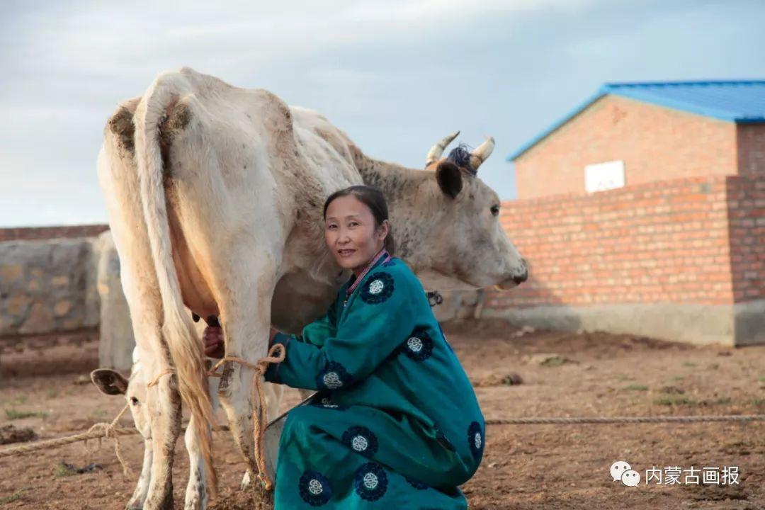 奶食里的蒙古族文化 第2张