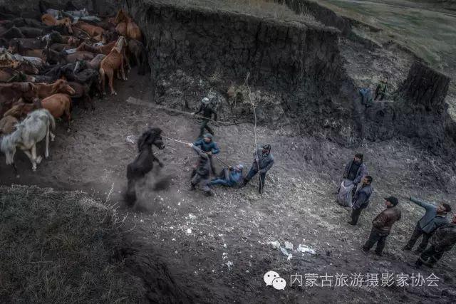"""【文化】清明过后打马印:蒙古民族马文化中的""""塔姆嘎"""" 第1张"""
