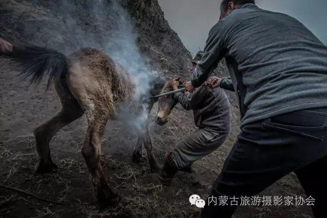 """【文化】清明过后打马印:蒙古民族马文化中的""""塔姆嘎"""" 第5张"""
