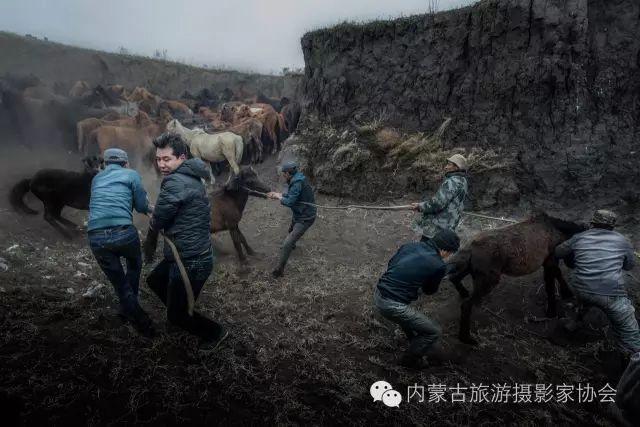 """【文化】清明过后打马印:蒙古民族马文化中的""""塔姆嘎"""" 第4张"""