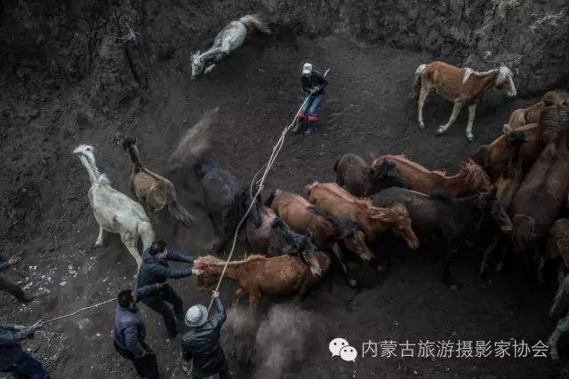 """【文化】清明过后打马印:蒙古民族马文化中的""""塔姆嘎"""" 第3张"""