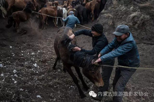 """【文化】清明过后打马印:蒙古民族马文化中的""""塔姆嘎"""" 第6张"""