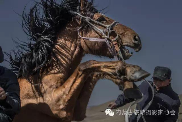 """【文化】清明过后打马印:蒙古民族马文化中的""""塔姆嘎"""" 第7张"""