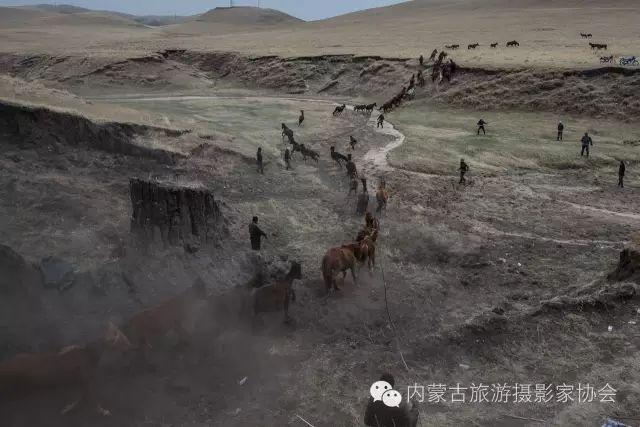 """【文化】清明过后打马印:蒙古民族马文化中的""""塔姆嘎"""" 第8张"""