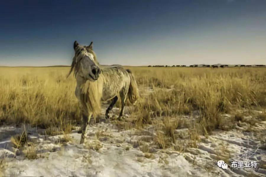 旅行摄影师甘乌力吉的摄影作品欣赏,太震撼! 第78张