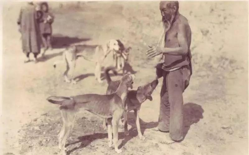 跟随成吉思汗远征欧洲的战犬——蒙古细犬 第2张