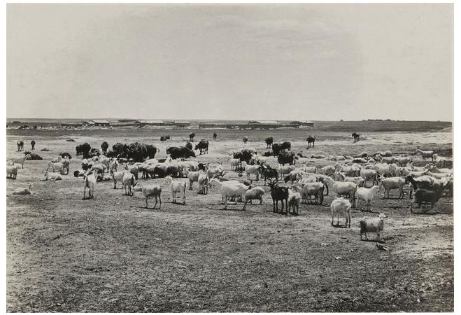 1924年的内蒙古通辽,老照片记录的是故事! 第3张