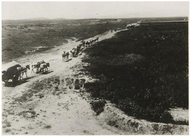 1924年的内蒙古通辽,老照片记录的是故事! 第11张