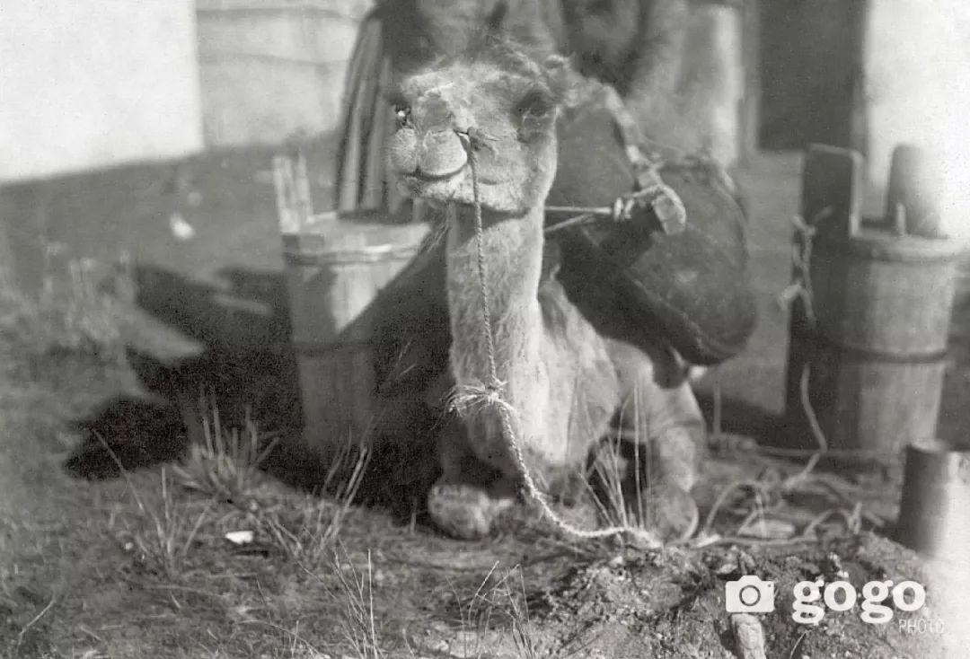【印迹】定格19 世纪初蒙古人 —— 贵族的帐篷 第12张