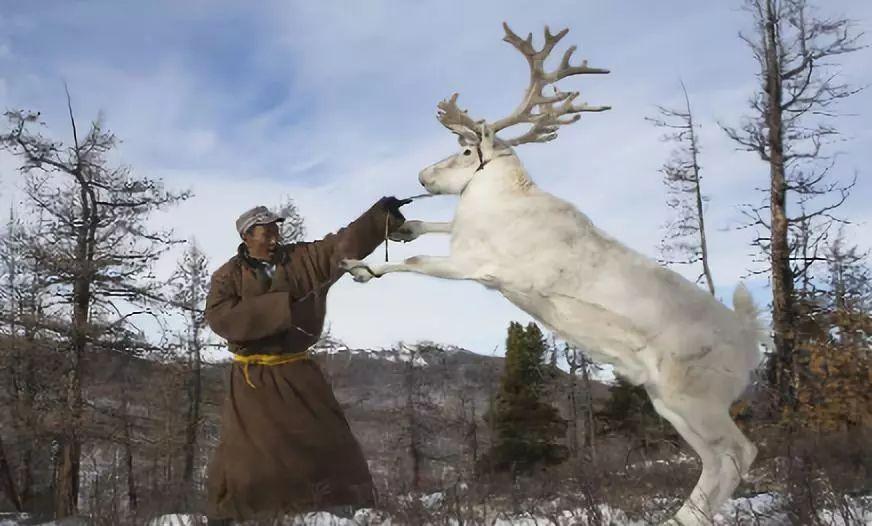 """【敬观文化】拒绝刻板印象:""""蒙古人都很能喝""""""""蒙古人不可能不喝酒"""" 第9张"""