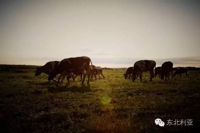 黑龙江丨准格尔蒙古族——齐齐哈尔依克明安旗 第5张 黑龙江丨准格尔蒙古族——齐齐哈尔依克明安旗 蒙古文化