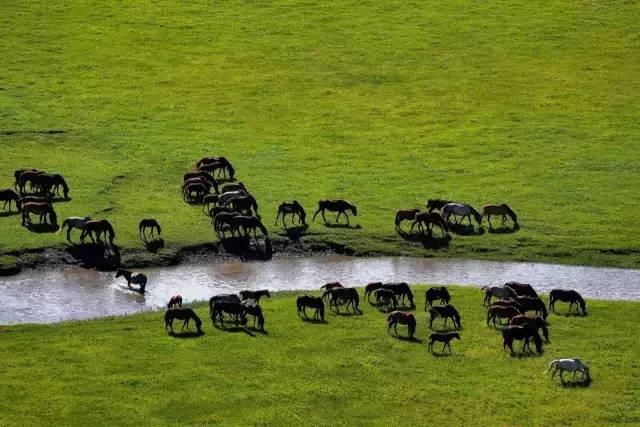 奔腾吧内蒙古!1500G素材,3万多张照片,这部历时一年拍摄的短片震撼了所有人 第24张