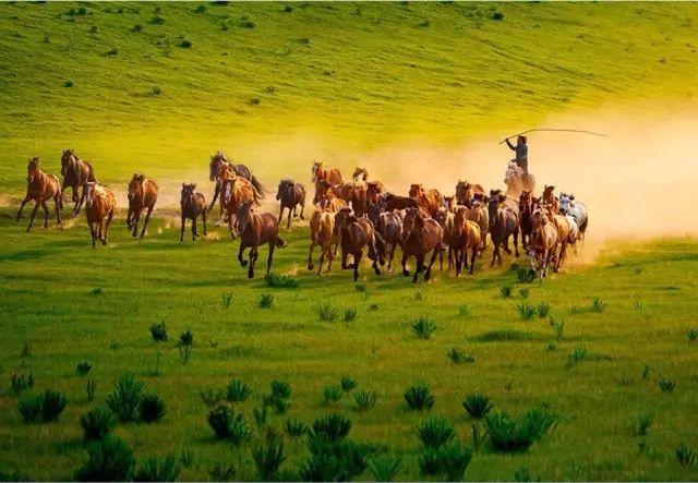 奔腾吧内蒙古!1500G素材,3万多张照片,这部历时一年拍摄的短片震撼了所有人 第25张
