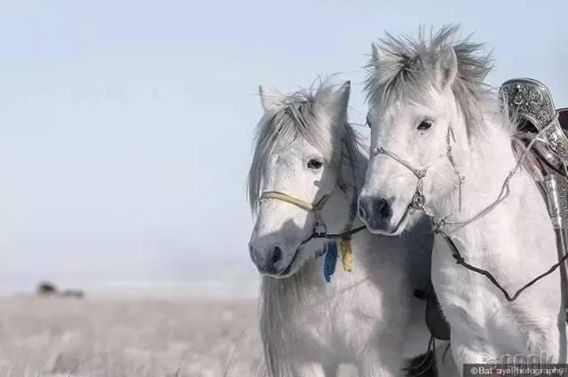 让人叹为观止的蒙古风景... 第32张