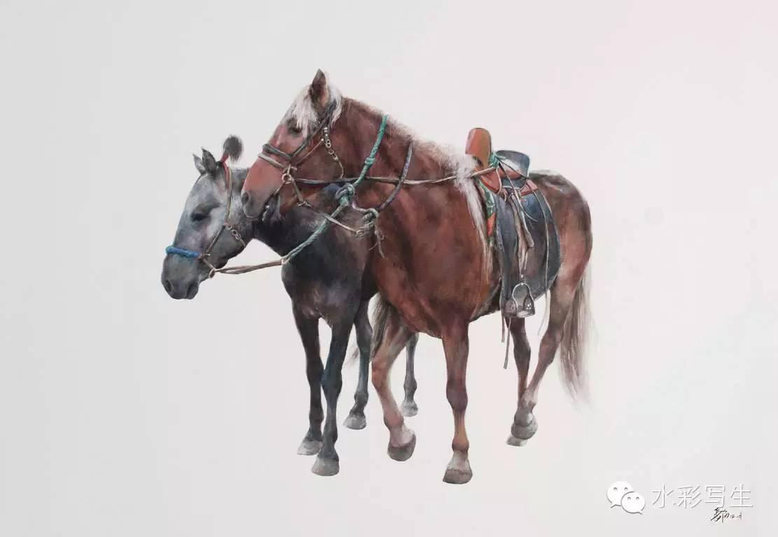 【蒙古人】草原骏马——长海水彩作品欣赏 第7张