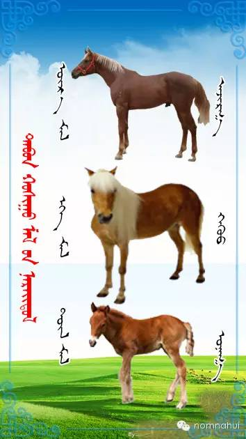 nomnahui(第二十九期)蒙古族五种牲畜蒙文名称对照图 第3张 nomnahui(第二十九期)蒙古族五种牲畜蒙文名称对照图 蒙古文库