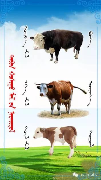 nomnahui(第二十九期)蒙古族五种牲畜蒙文名称对照图 第2张 nomnahui(第二十九期)蒙古族五种牲畜蒙文名称对照图 蒙古文库