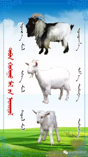 nomnahui(第二十九期)蒙古族五种牲畜蒙文名称对照图 第5张 nomnahui(第二十九期)蒙古族五种牲畜蒙文名称对照图 蒙古文库