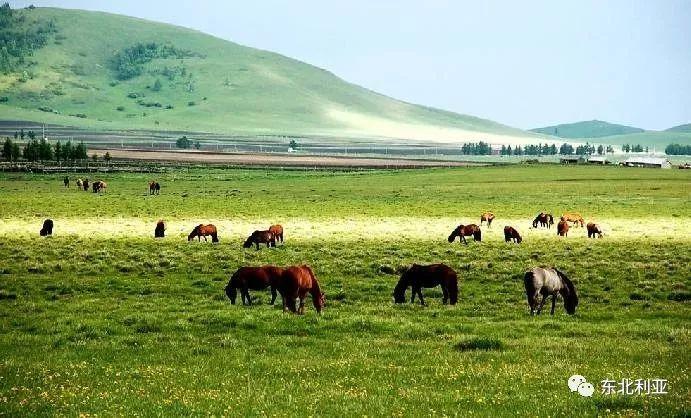 明珠尔:巴尔虎蒙古人从巴尔古真迁居察哈尔的考述 第5张 明珠尔:巴尔虎蒙古人从巴尔古真迁居察哈尔的考述 蒙古文化