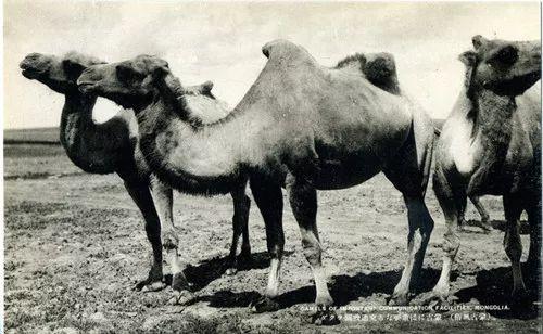 蒙古风俗  (民国日本明信片) 第13张