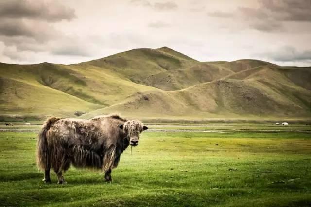 【印迹】镜头下的蒙古人:摄影师Brian Hodges作品 第16张 【印迹】镜头下的蒙古人:摄影师Brian Hodges作品 蒙古文化