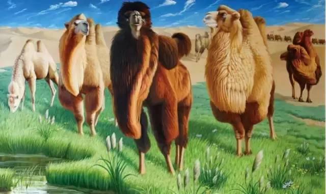艺术家恩和:与骆驼的不解情缘 第16张
