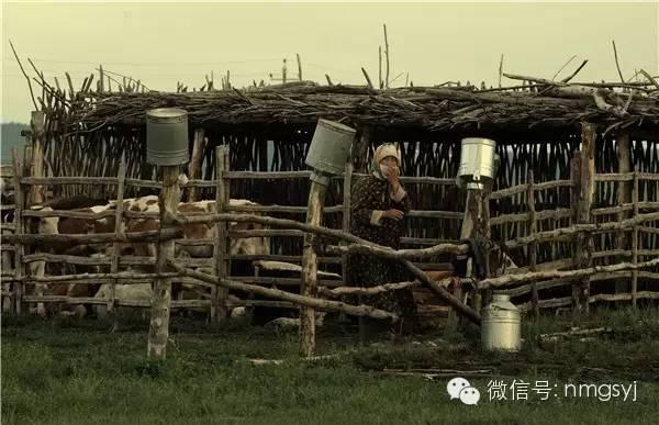 内蒙古摄影家—宝音摄影作品  情系草原 第22张