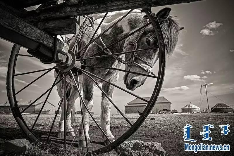 【音频·图片】蒙古族青年摄影家宝日玛个人摄影展 第4张 【音频·图片】蒙古族青年摄影家宝日玛个人摄影展 蒙古文化