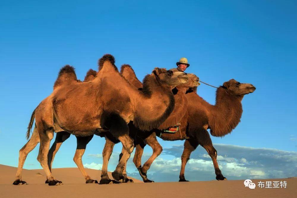 蒙古摄影师巴特扎亚摄影作品欣赏 第16张 蒙古摄影师巴特扎亚摄影作品欣赏 蒙古文化