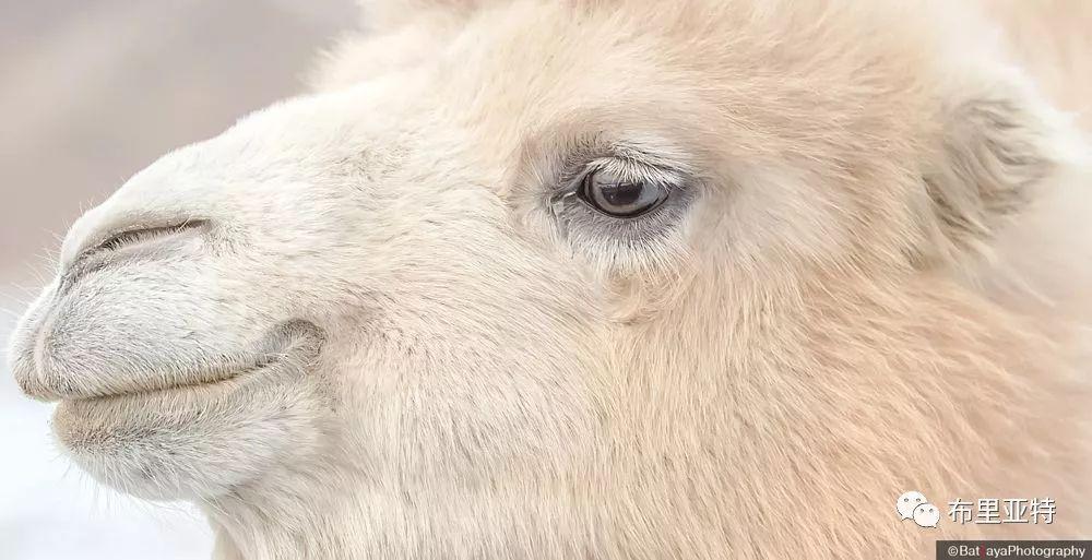 蒙古摄影师巴特扎亚摄影作品欣赏 第31张 蒙古摄影师巴特扎亚摄影作品欣赏 蒙古文化