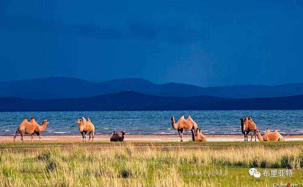 蒙古摄影师巴特扎亚摄影作品欣赏 第36张 蒙古摄影师巴特扎亚摄影作品欣赏 蒙古文化