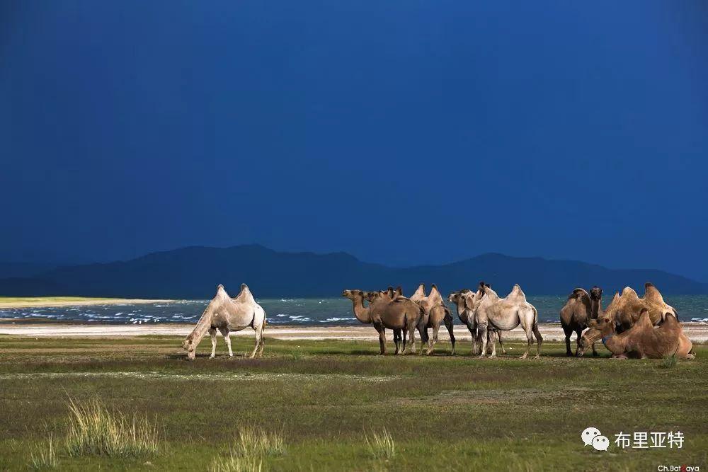 蒙古摄影师巴特扎亚摄影作品欣赏 第41张 蒙古摄影师巴特扎亚摄影作品欣赏 蒙古文化