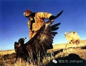 民俗 | 蒙古族狩猎禁忌 第3张