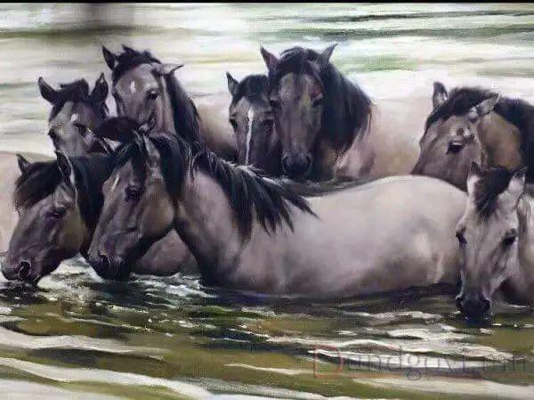 画家道尔吉德日木画笔下的蒙古马,简直栩栩如生 第13张