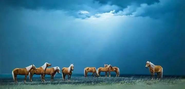 画家道尔吉德日木画笔下的蒙古马,简直栩栩如生 第12张