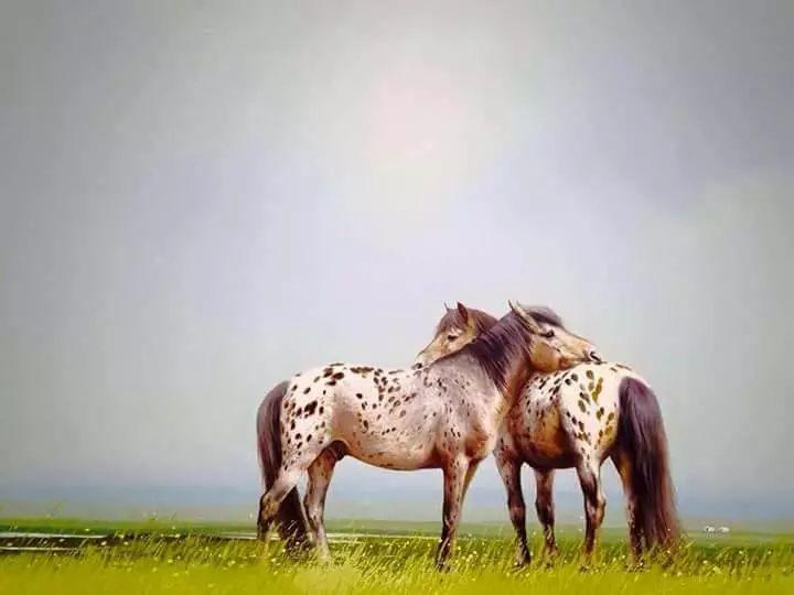 画家道尔吉德日木画笔下的蒙古马,简直栩栩如生 第15张