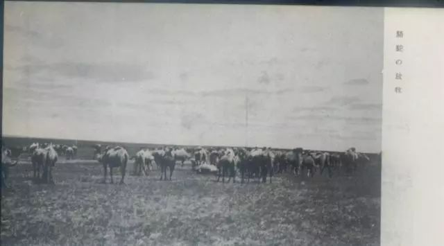 老明信片:30年代的内蒙古  (组图) 第3张 老明信片:30年代的内蒙古  (组图) 蒙古文化