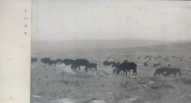 老明信片:30年代的内蒙古  (组图) 第4张 老明信片:30年代的内蒙古  (组图) 蒙古文化