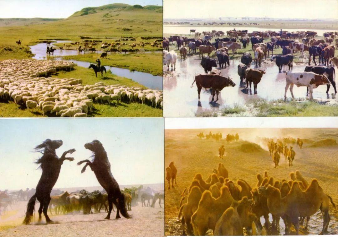 老明信片:30年代的内蒙古  (组图) 第16张 老明信片:30年代的内蒙古  (组图) 蒙古文化