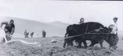 【蒙古图片】当年赴内蒙古插队知青,满满的都是回忆(图集) 第4张 【蒙古图片】当年赴内蒙古插队知青,满满的都是回忆(图集) 蒙古文化