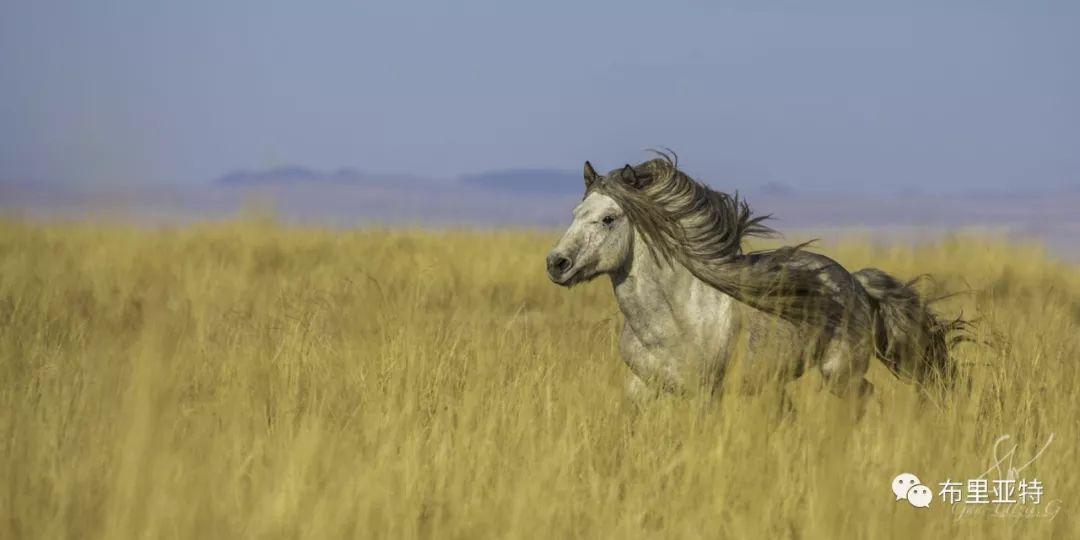 旅行摄影师甘乌力吉的摄影作品欣赏,太震撼! 第15张