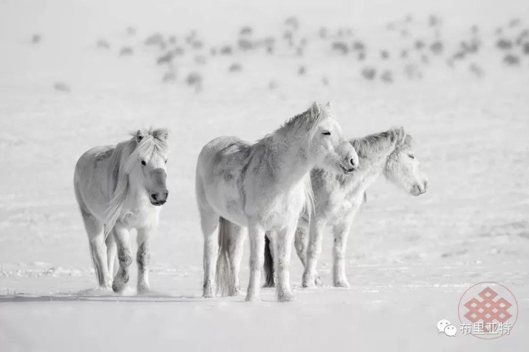 旅行摄影师甘乌力吉的摄影作品欣赏,太震撼! 第68张