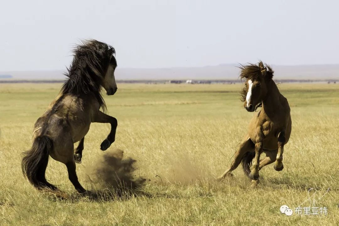 旅行摄影师甘乌力吉的摄影作品欣赏,太震撼! 第80张