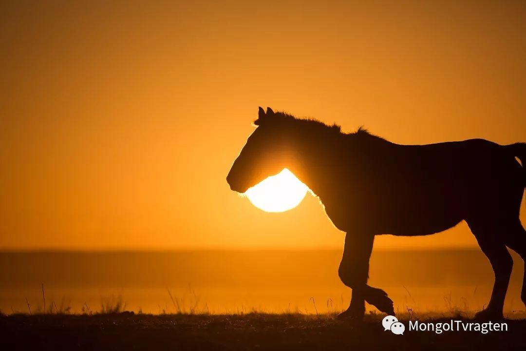 镜头中的蒙古脸庞:摄影师P·杭盖呼摄影作品 第22张 镜头中的蒙古脸庞:摄影师P·杭盖呼摄影作品 蒙古文化