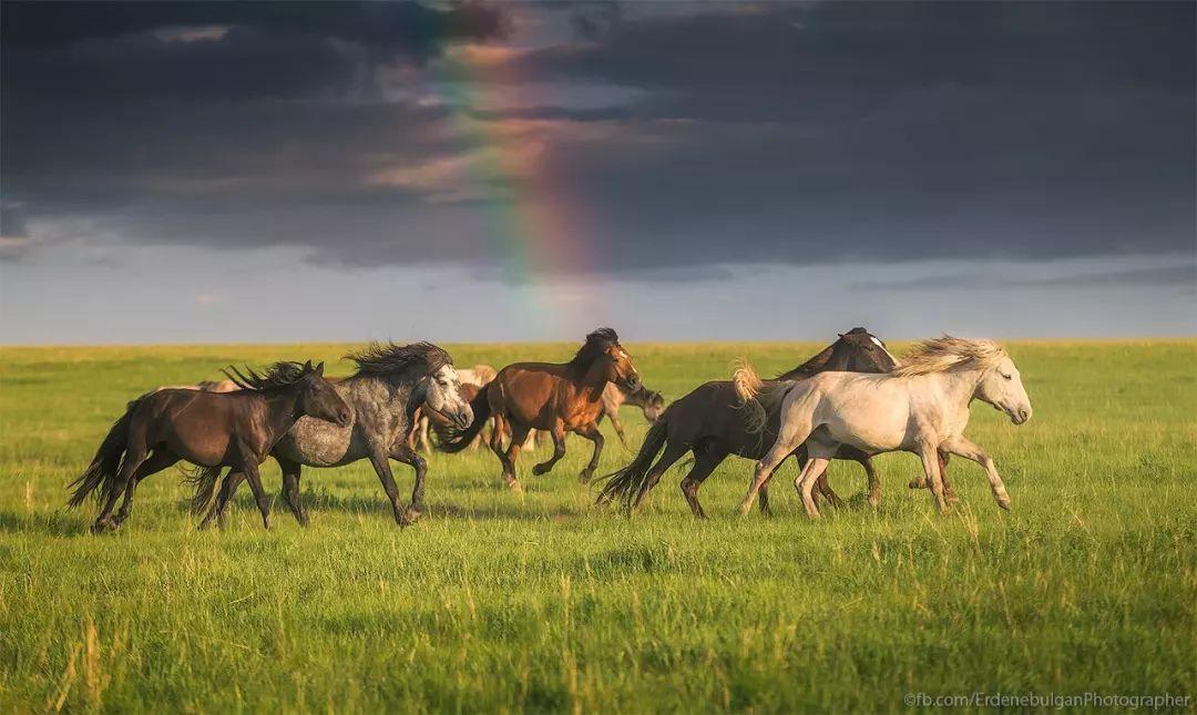 青年摄影师B·额尔登布勒干镜头下的蒙古大地,令人向往 第28张