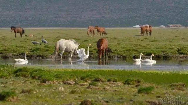 一个神话般的国度,一个安静的地方,我们叫它蒙古 第9张