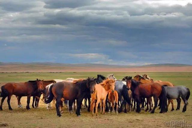 一个神话般的国度,一个安静的地方,我们叫它蒙古 第6张