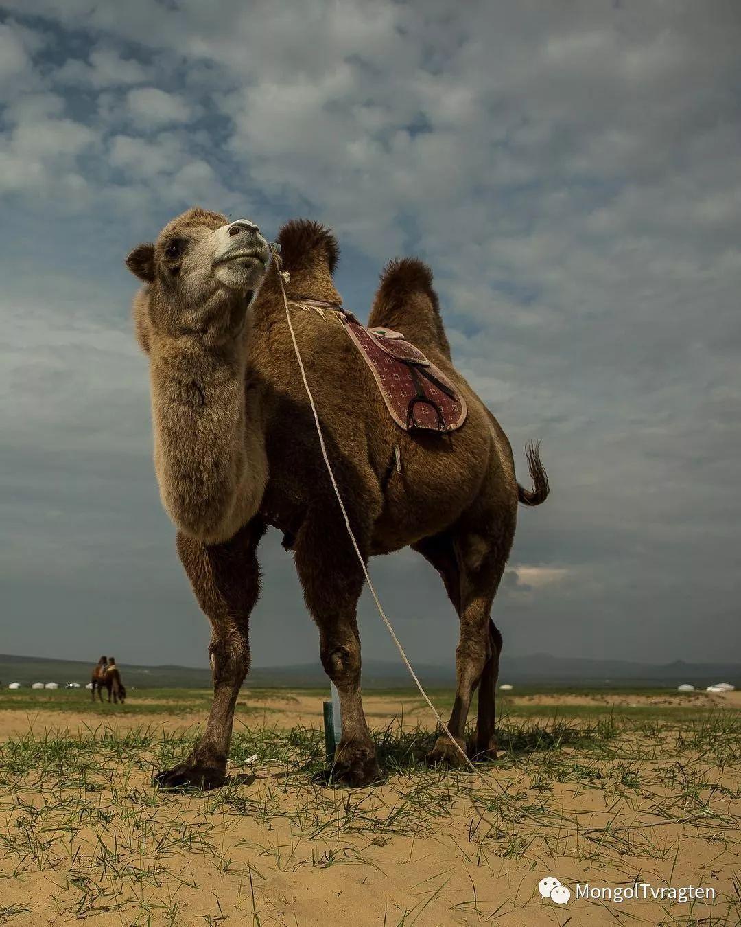蒙古影像-- Henne Metz 第6张